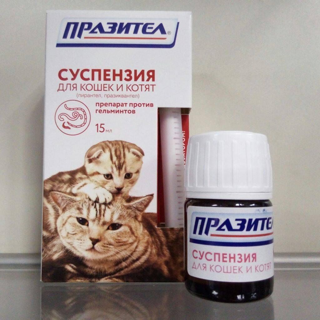 Празител суспензия для кошек и котят   инструкция, цена, отзывы