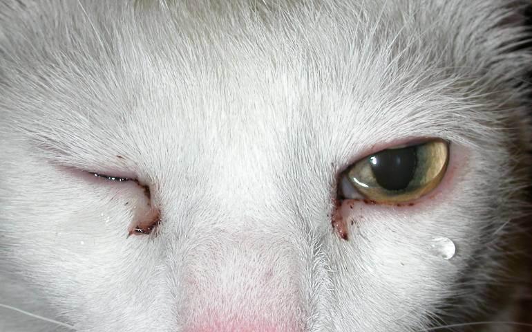 У котенка не открываются глаза: причины и первая помощь