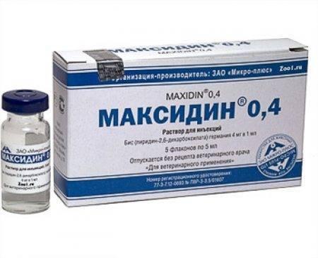Максидин для собак: описание препарата, состав, форма выпуска, назначение, дозировка, противопоказания