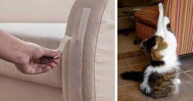 Почему кошка жует или лижет пластиковые пакеты?