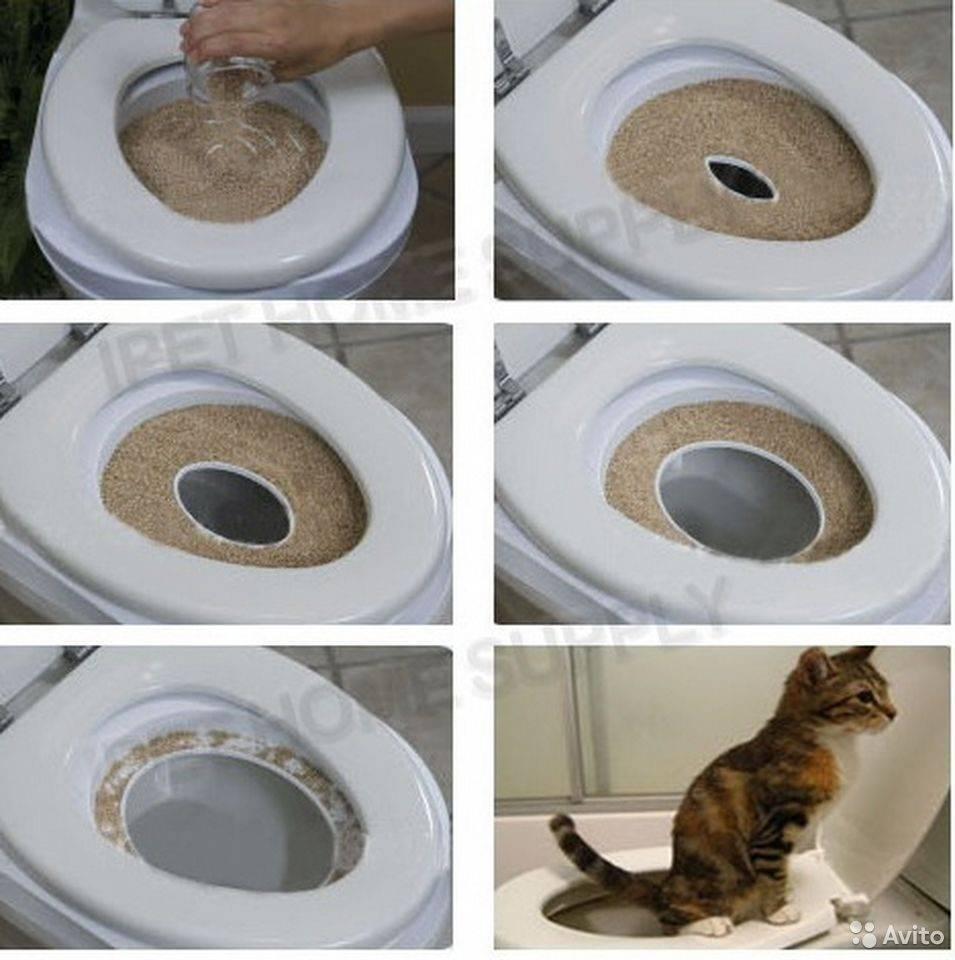 Как приучить кота ходить на унитаз