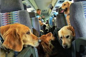 Перевозка животных за границу