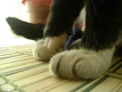 Отек тела у кошки: причины и лечение
