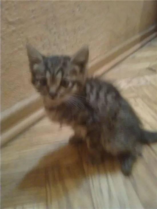 Распространенные болезни кошек с фото: симптомы и лечение, последствия и профилактика, заболевания котят и пожилых особей
