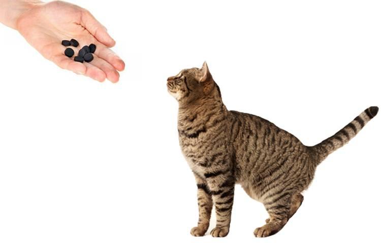 Как правильно давать активированный уголь кошке при поносе: дозировка, советы, рекомендации