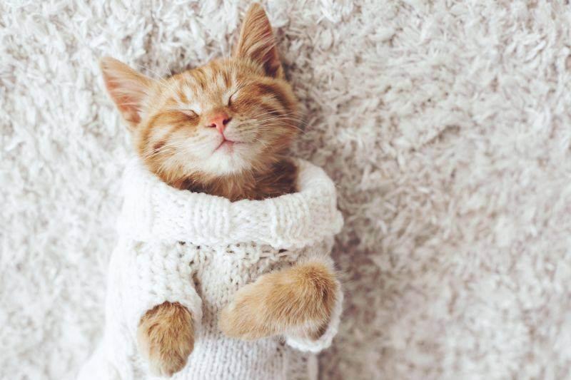 Лечение насморка у кошек в домашних условиях