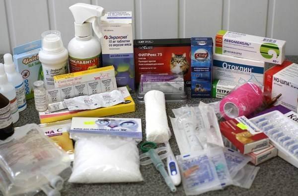 Домашняя кошачья аптечка. полный список инструментов и препаратов.
