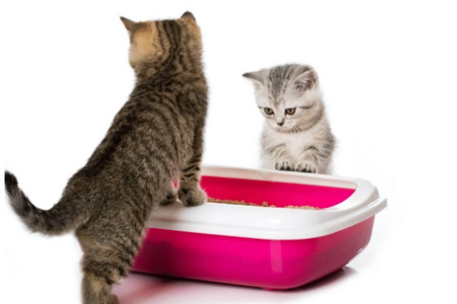 Как приучить котёнка к лотку - быстро, с наполнителем, с какого возраста, в новом доме, с улицы, с решеткой, народные средства, другой кошки, как долго