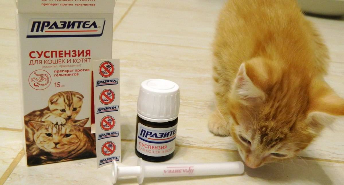 Лучшие глистогонные препараты для кошек   цена, перед прививкой, отзывы