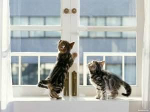 Падение кошек с высоты - ситивет, санкт-петербург
