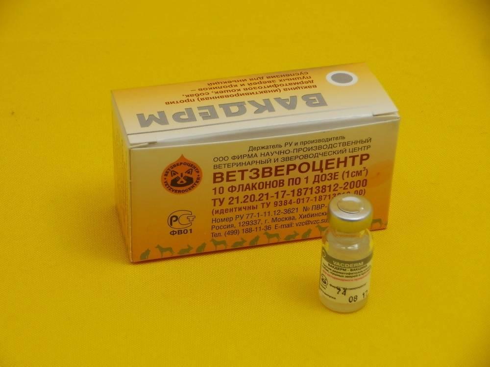 Вакцина вакдерм для кошек и собак
