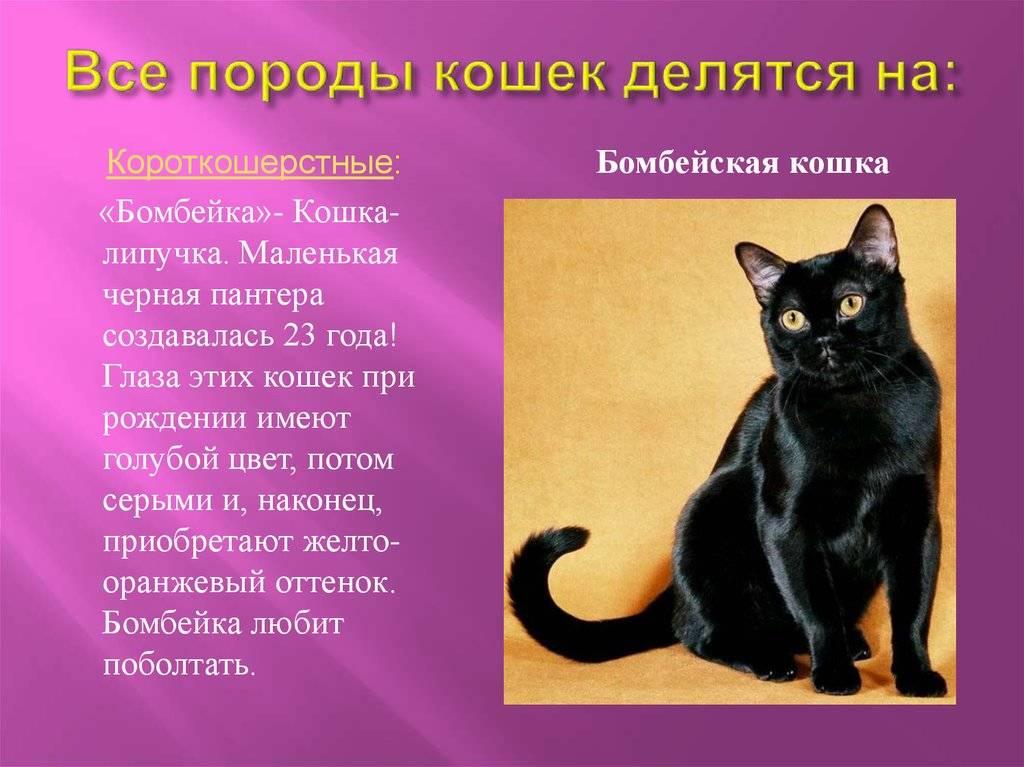 Сколько прожил самый старый кот? всё про кошек долгожителей!