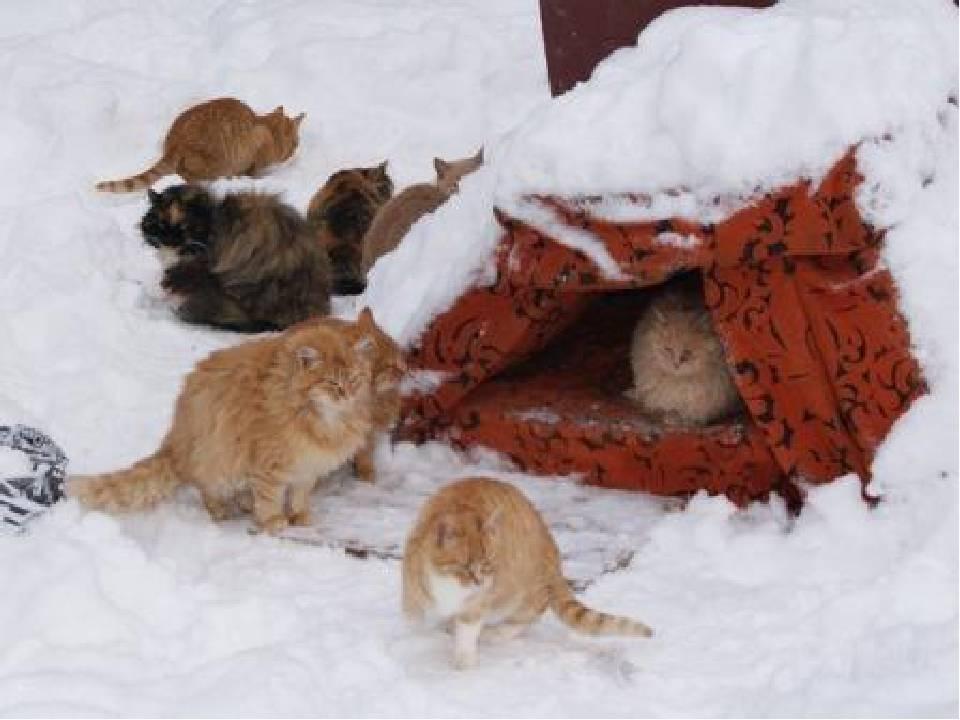 Мерзнут ли кошки зимой на улице, при какой температуре они могут жить вне помещения, как выживают?