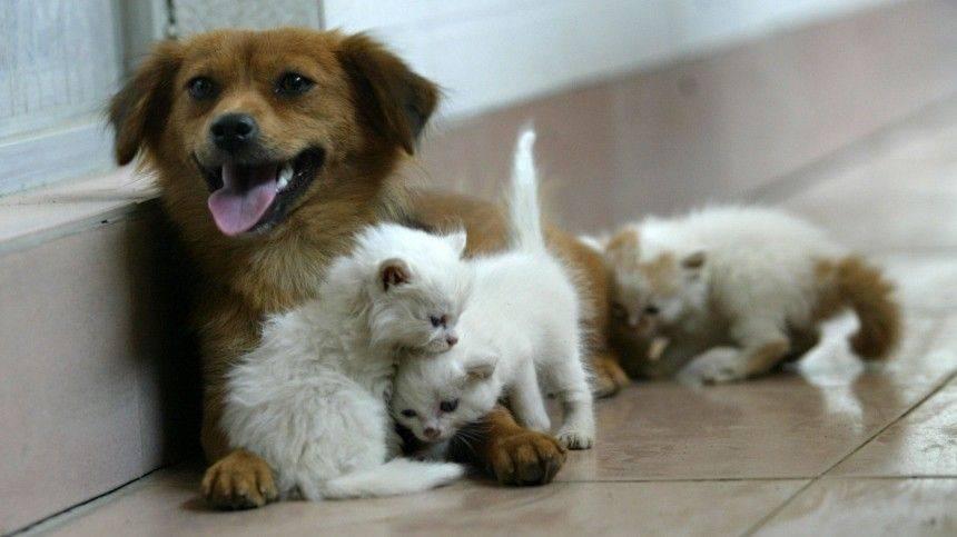 Лучшие дружелюбные породы кошек