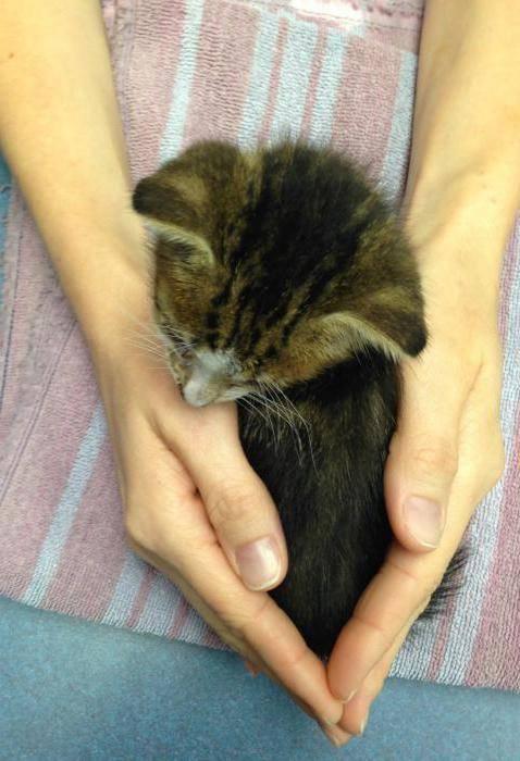 Как и чем лечить понос у котенка в домашних условиях: диета, препараты, уход