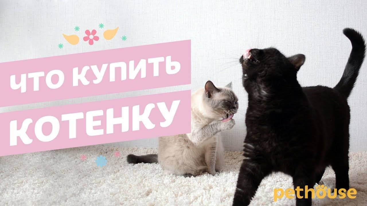Что нужно купить для котенка: список покупок