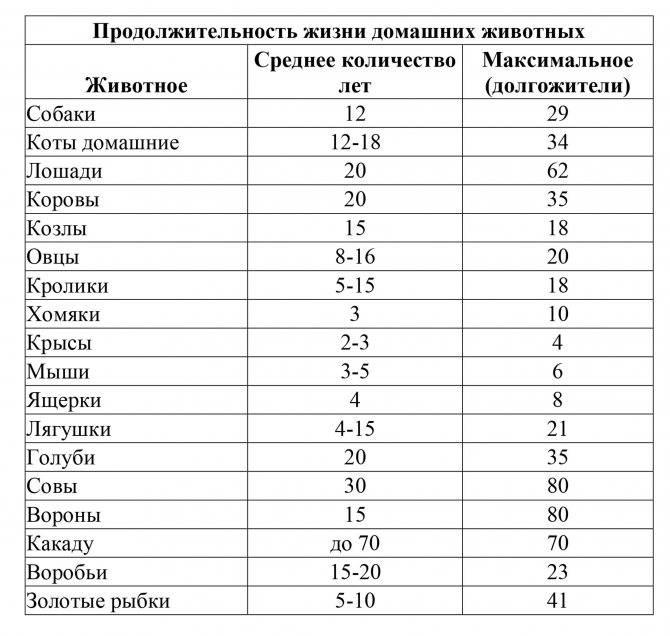 Русско-европейская лайка (рел): как приручить характерного друга?