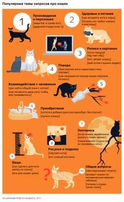 Кастрированный кот много ест, как правильно кормить кота