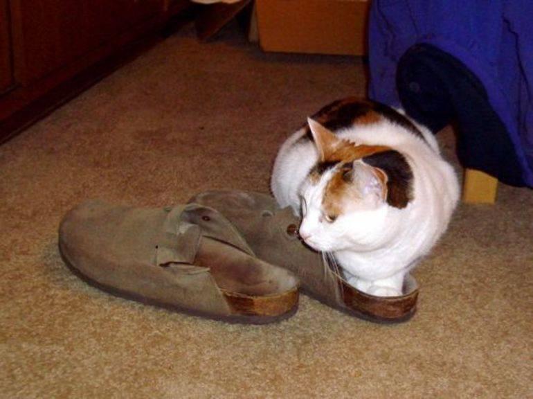 Есть ли необходимость в проведении кастрации котов: что будет если не делать