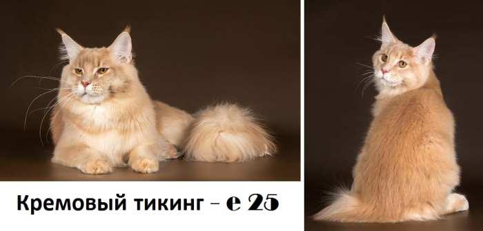 Белый мейн-кун: особенности котов с голубыми и разноцветными глазами