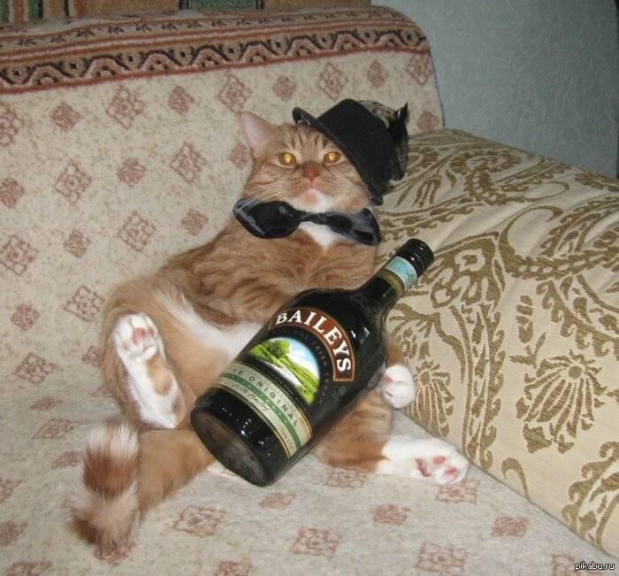 Можно ли котам валерьянку – польза, вред и опасность
