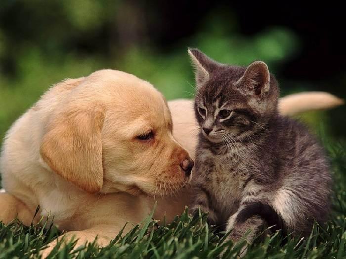 Кошки или собаки - кто лучше, кого выбрать, чтобы завести дома