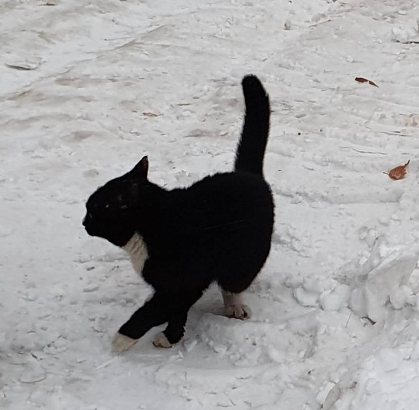 Коронавирус у кошек - экспресс газета