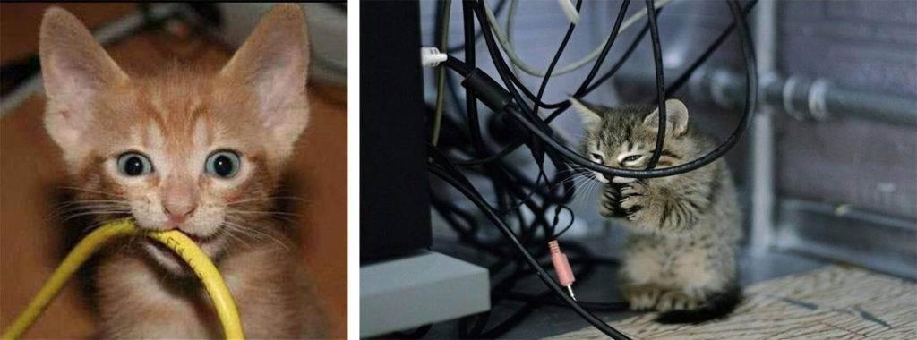 Как отучить кошку грызть провода.