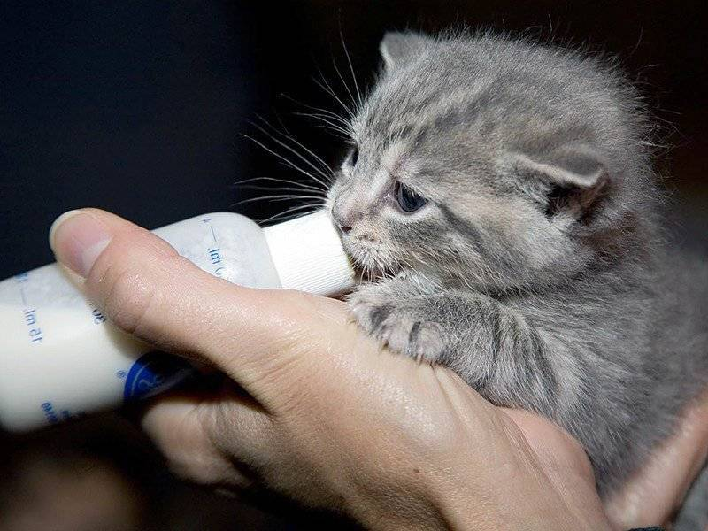 Как правильно воспитать котенка ласковым