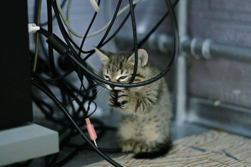 Почему кошка грызет провода в доме