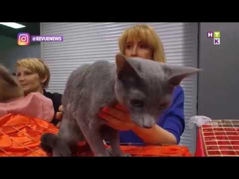 10 фактов о необычайных лечебных способностях кошек