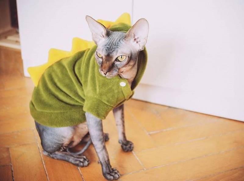 Какая у кошки температура тела