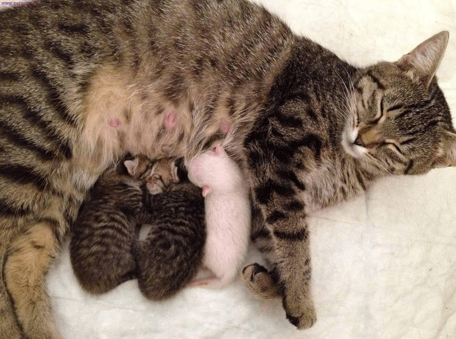 Сонник кошка с родившимися котятами. к чему снится кошка с родившимися котятами видеть во сне - сонник дома солнца