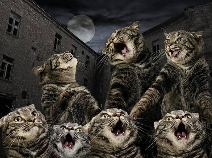 Что делать: кот орет по ночам. причины и лечение