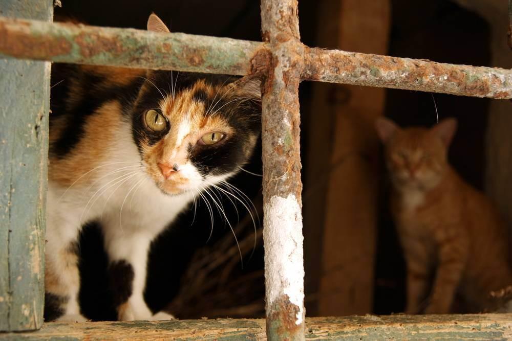 Вирусная лейкемия кошек: самая лучшая битва — та, которой удалось избежать