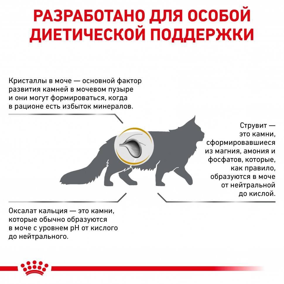 Лечение мочекаменной болезни у котов в домашних условиях: симптомы и признаки, чем кормить (диета) и как помочь коту
