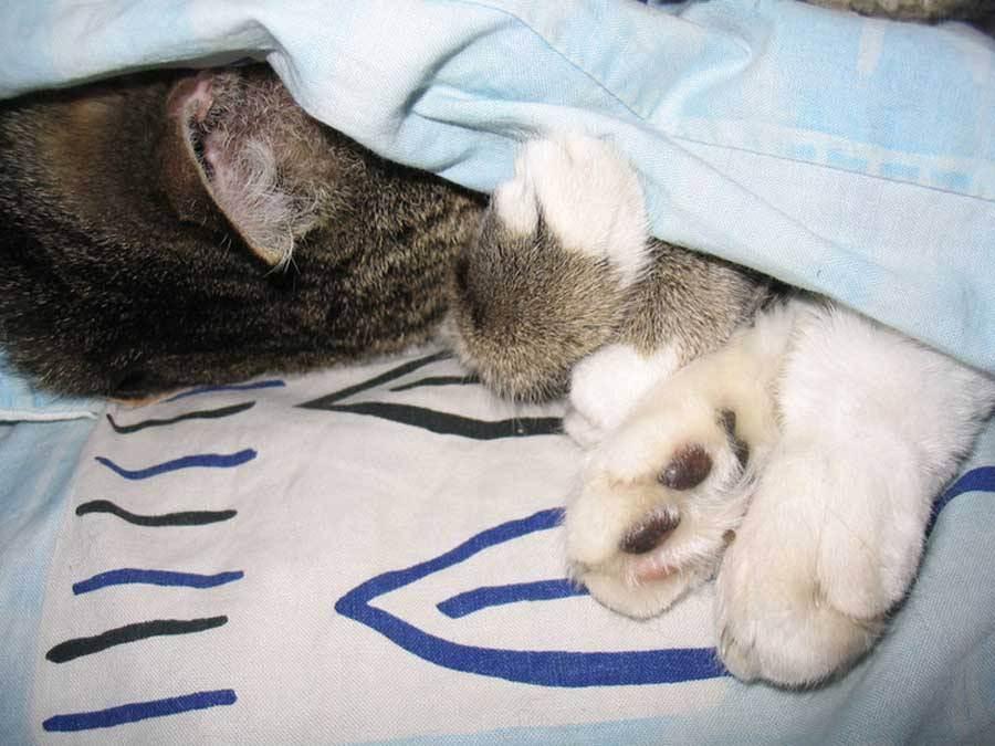 Почему кошка спит на спине: топ-8 причин почему кошка спит на спине: топ-8 причин