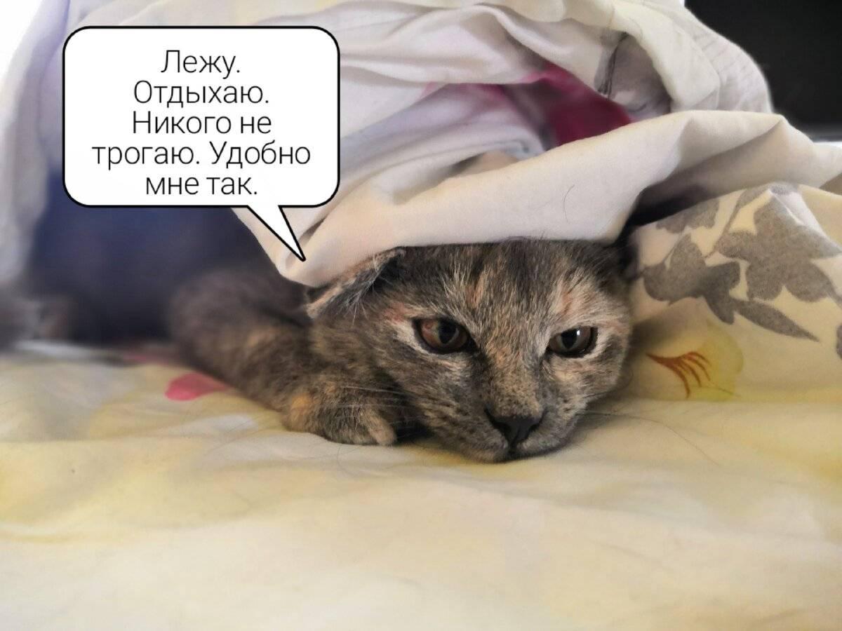 Почему кошка прячется под одеяло: топ-7 причин