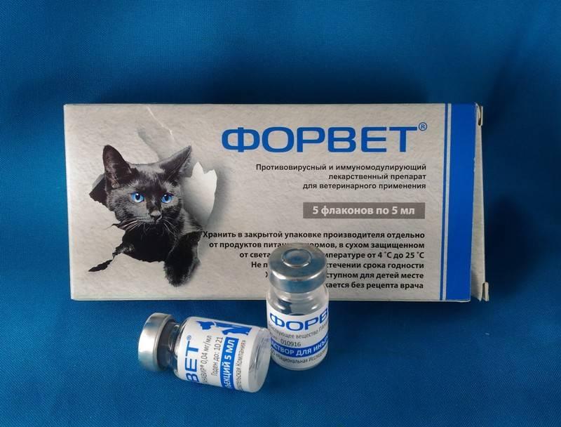 Какие обезболивающие можно давать кошкам при раке