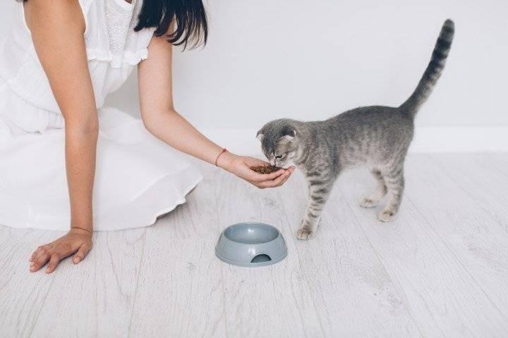 Чем кормить кота, кроме сухого корма?