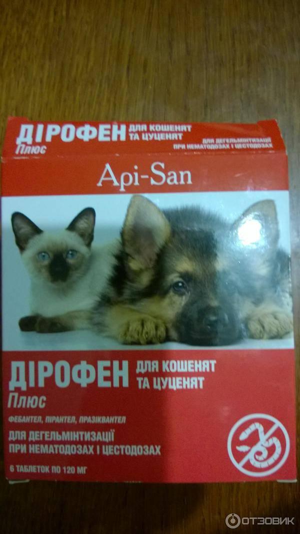 Как дирофен для кошек уничтожает глистов