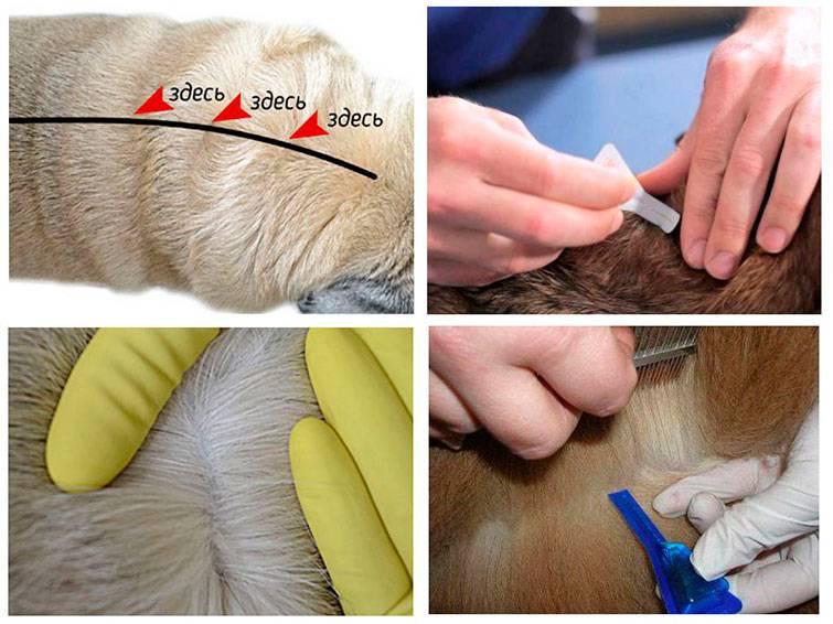 Капли от блох и клещей для кошек и собак