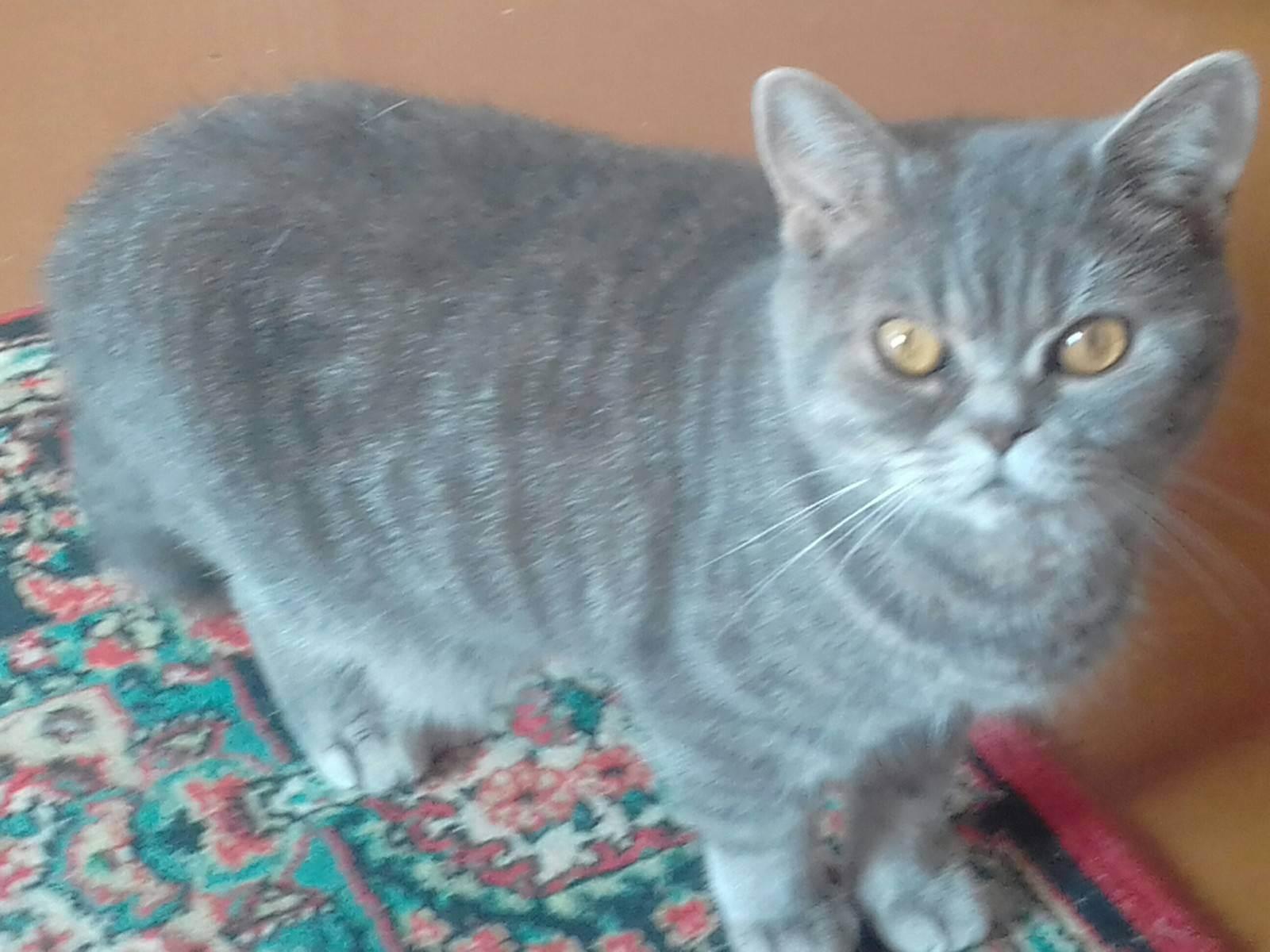 Почему коты и кошки дома постоянно сильно линяют, что делать в домашних условиях: причины и решение проблемы линьки