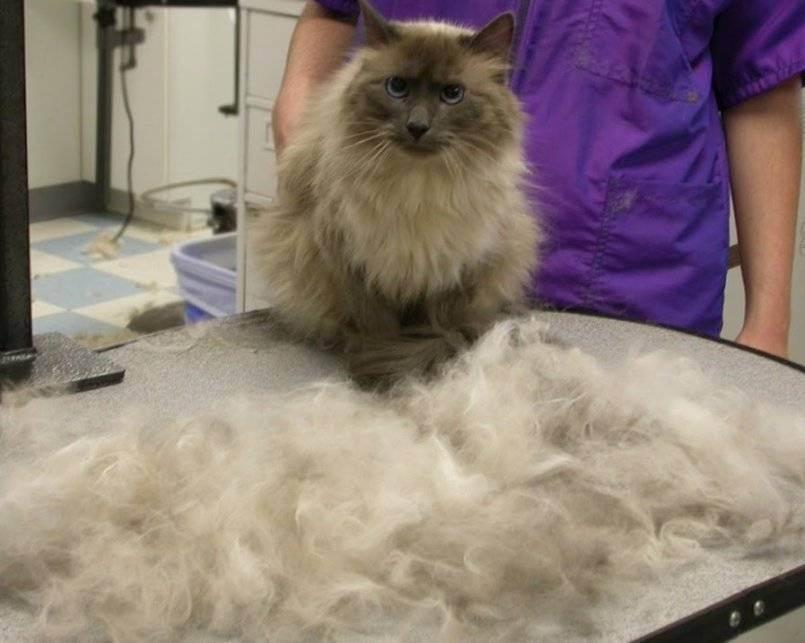 Что такое фурминатор для кошек и как его использовать