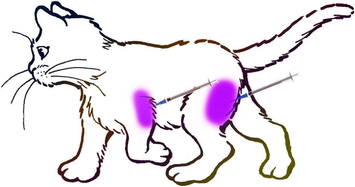 Фото как сделать укол коту самостоятельно: в холку, подкожно, внутримышечно, в бедро