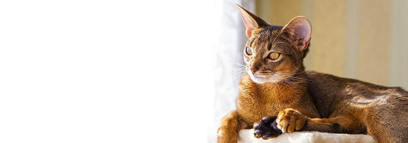 Зачем кошкам таурин