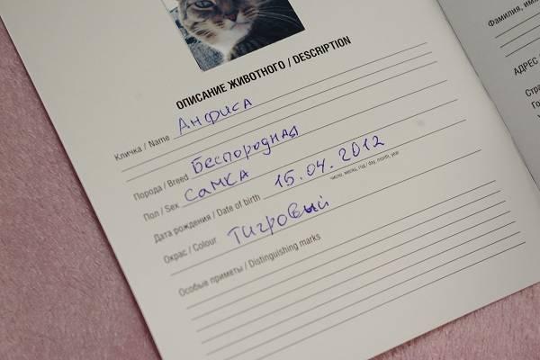 Как и где оформить ветеринарный паспорт для кошки