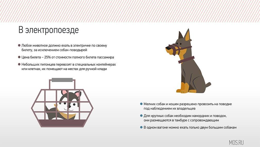 Как перевезти кошку в самолете: правила и нюансы в 2021 году