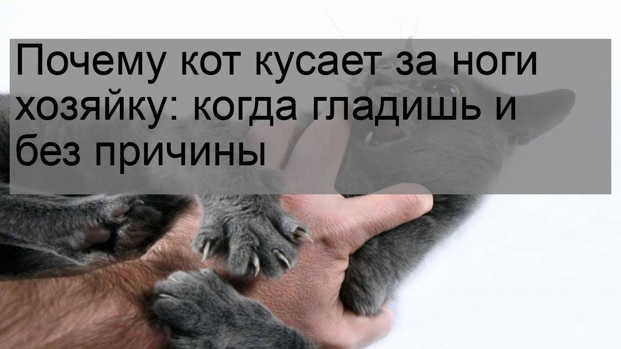 Кошка кусается когда ее гладишь: каковы причины и как отучить
