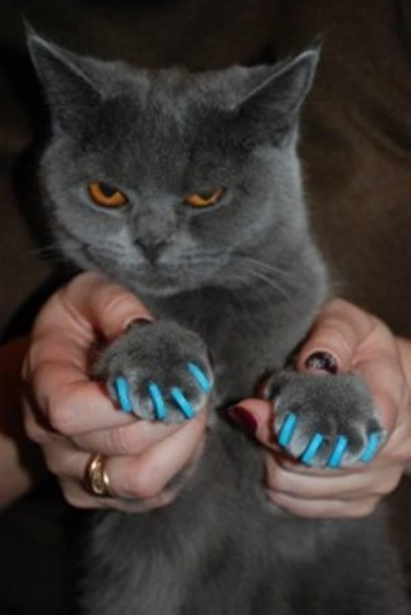 Антицарапки для кошек: зачем нужны и как использовать?